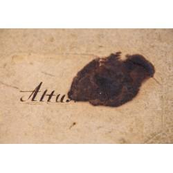 Ein Altus-Stimmheft von Bachs Thomanern